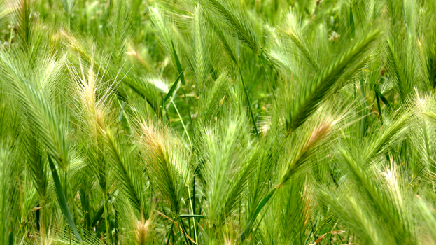 Field Grass Study 1 by Ty-Phi
