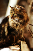 Cat by Tiina23