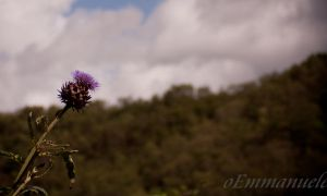 Thistle high in the sky by oEmmanuele