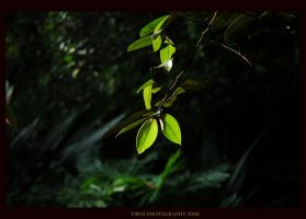 Leaves Of Life by LethalVirus