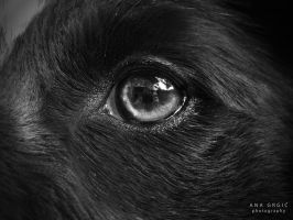 Border collie eyes by runaShe