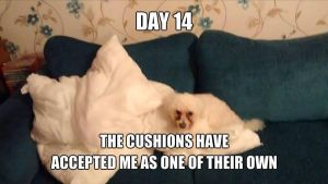 Cushions, Day 14 by DemonMew