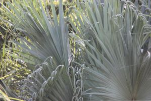 00199 - Plant Fronds by emstock