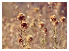 Brown Flowers by hell0z0mbie