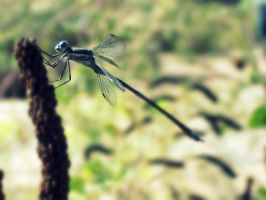 dragonfly by bloody-magpies