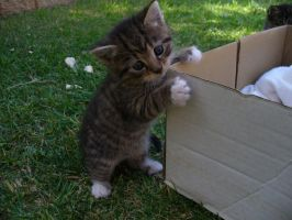 I Can Has Box? by Toothbrush-Traynor