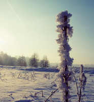 :WinterScape: by MateuszPisarski