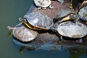 Turtle Family by terryrunion