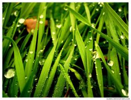dew by Korni