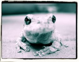 Frog Five by RisikaMadden