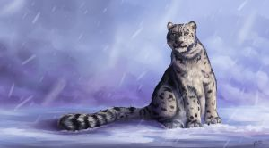 Snow Leopard by Greykitty