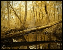 Golden Swamp by explicitly
