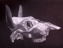Cow Skull Drawing by Stixwitdafix