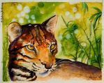 Asian Golden Cat by SunStateGalleries