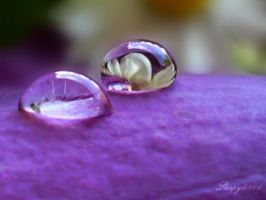 The spring in drops... by sleepy0806