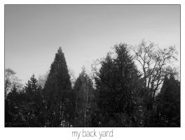 my back yard by houseofleaves