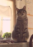 Waiting for KiteKat by vitorizza