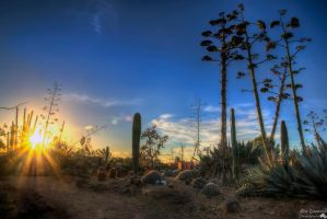 Sundown At Cactus Country by djzontheball