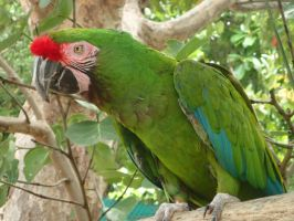 Parrot by Chrissice