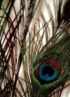 Peacock feather 1 by sexyillustrator