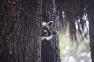 Peek-A-Boo by Plasse-Photography