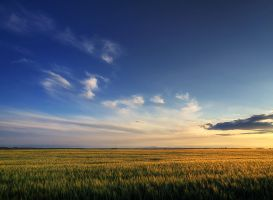 Summer wheatlands pt.II. by realityDream