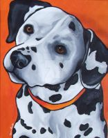 Dalmation by StudioSRV