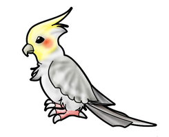 :: Cockatiel by crystalmew