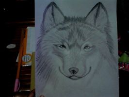 Wolf drawing by keichan77