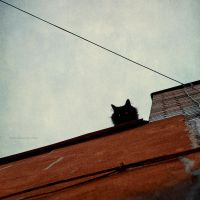 watcher on the roof by BlauBeerKuchen