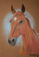 Oldenburg Mare - Pastel Commission by BLACKNIGHTINGALE81
