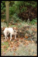 Dog In The Woods by TraceyValentine