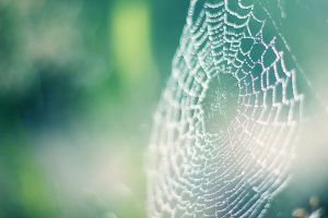 Spider Web by pashia