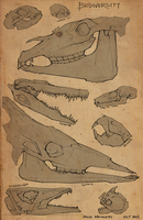 Animal Skulls by JulioNicoletti