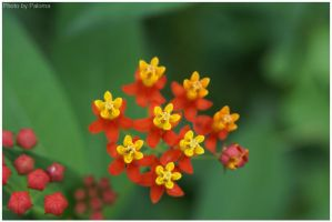 Tiny little flowers by palchan