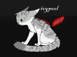 Ivypool doodle by cIiche