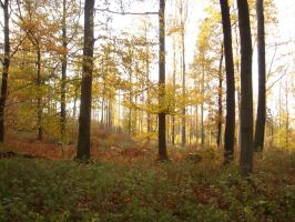autumn forest 4 by sacral-stock