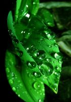 Water Droplets on Green Plant by ticklemeimsexy