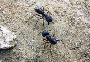 Ant's-Face to Face by rajjib