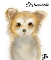 Chihuahua (Day 188) by Hedwigs-art