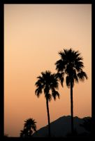 Palm trees at dusk by FlamingAvocado