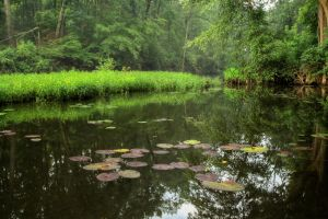 Fisher-lilypad-hdr by joelht74