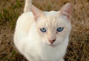 Ol' Blue Eyes by Navina
