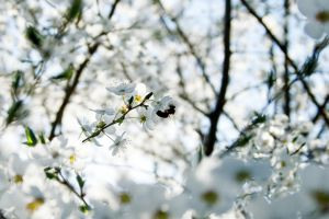 Hello Spring by jufik