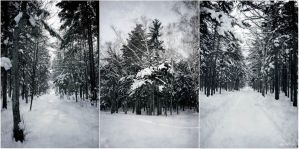 Winter forest by Nattyw