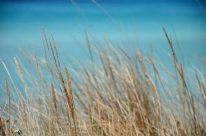 Reeds by the sea 2 by AmmarkoV1