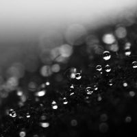 Water droplets by misplacedApathy
