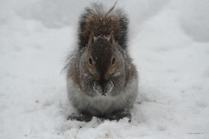 Snow storm seed eater by natureguy