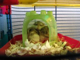 Squeezed Hamsters by BethaLim