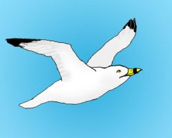 Seagull by CdQ-14